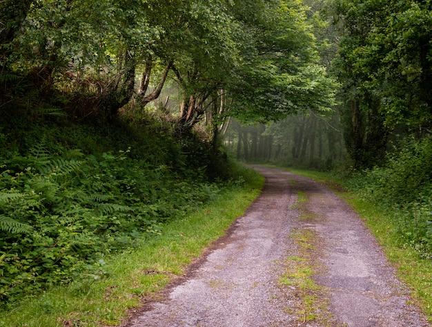 Estrada de cascalho de sujeira sinuosa através da floresta verde ensolarada, iluminada por raios de sol através da névoa