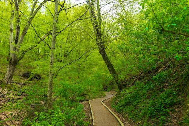 Estrada de cascalho sinuosa através da floresta verde ensolarada iluminada por raios de sol em meio à névoa