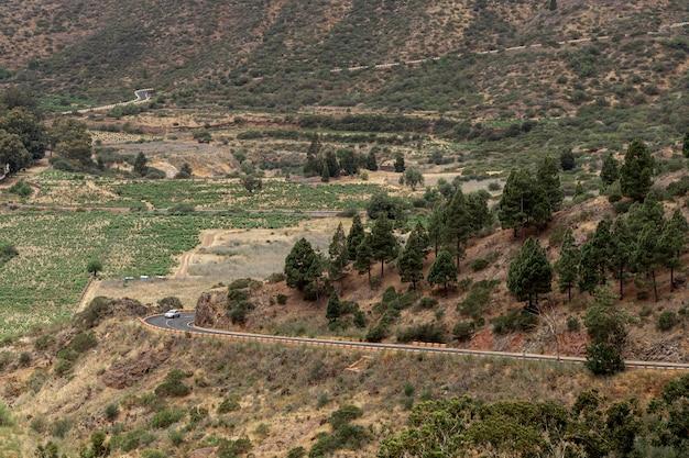 Estrada de colina com árvores raras