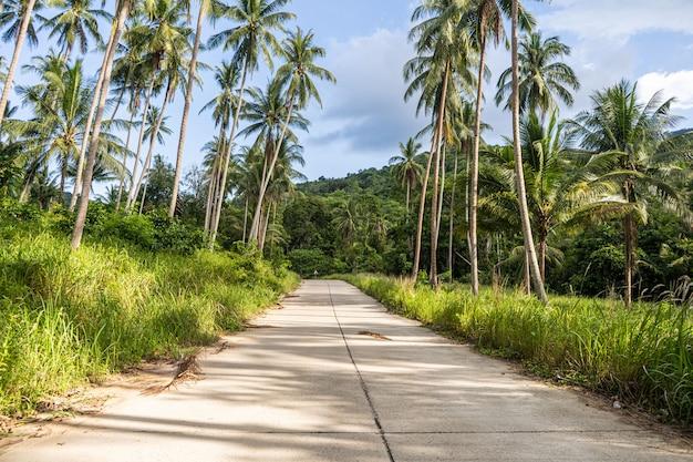 Estrada de concreto através da floresta entre as palmeiras