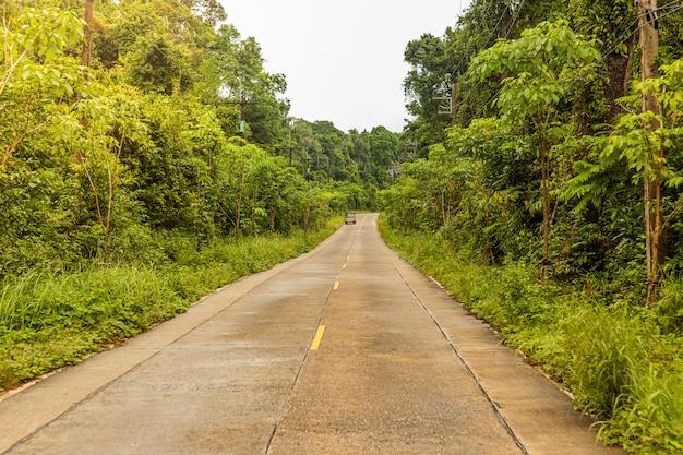 Estrada de concreto na floresta tropical é uma bela paisagem