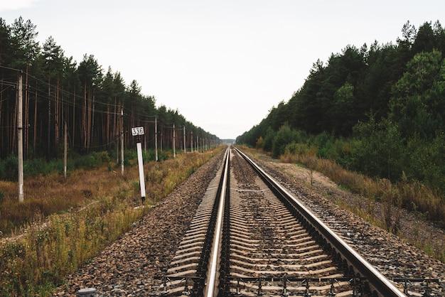 Estrada de ferro que viaja na perspectiva através da floresta.