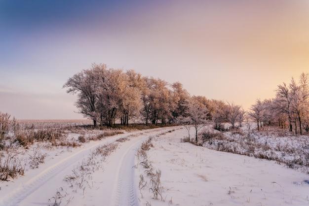 Estrada de inverno ao longo de árvores na luz do sol