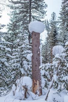 Estrada de inverno em um bosque nevado, árvores altas ao longo da estrada.