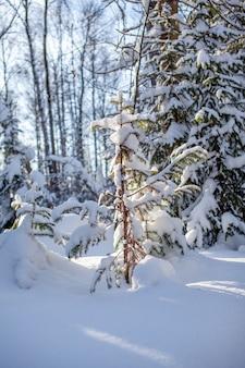 Estrada de inverno em uma floresta de neve com árvores altas ao longo da estrada