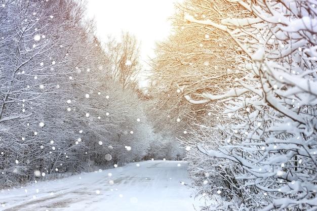 Estrada de inverno na floresta