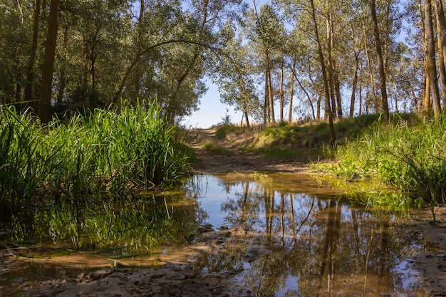 Estrada de lama atravessada pelo rio. lama. pântano.