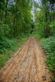 Estrada de lama na floresta