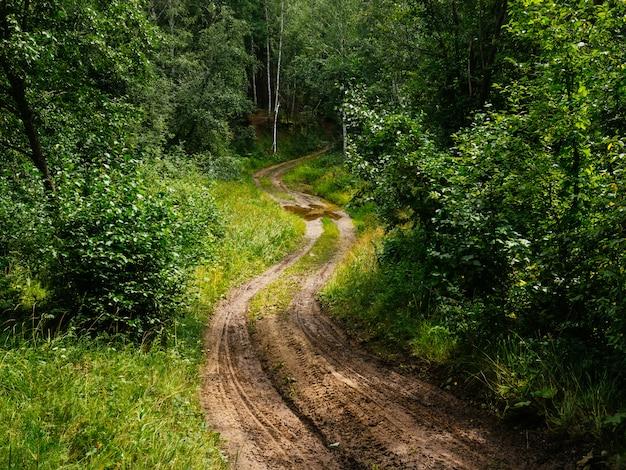 Estrada de lama no meio da floresta