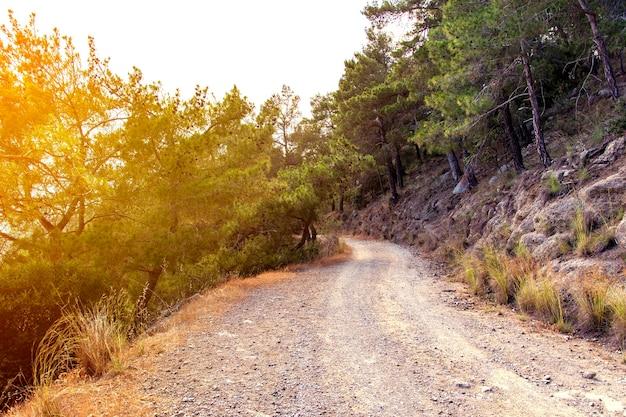 Estrada de montanha através de pinheiros.