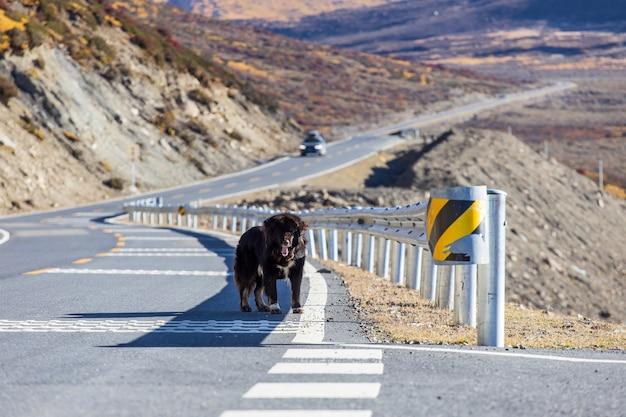 Estrada de montanha sinuosa bonita com um asfalto perfeito com pedras altas e pôr do sol colorido no verão.