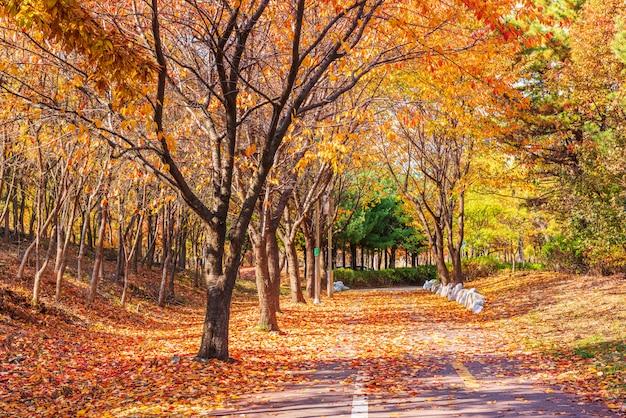 Estrada de outono no parque