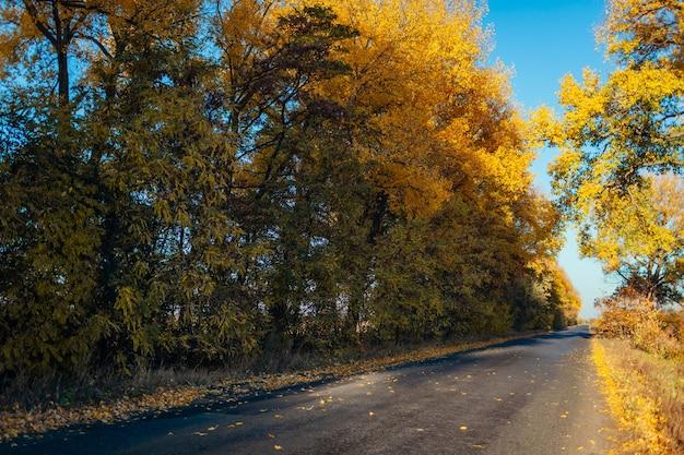 Estrada de outono vazia, rodeada de árvores amarelas. belos subúrbios ao pôr do sol Foto Premium
