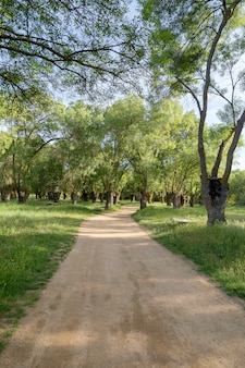 Estrada de terra através de uma floresta
