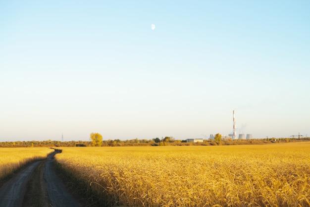 Estrada de terra através do campo de trigo dourado na luz solar sob o céu azul claro