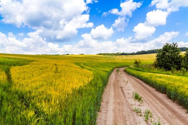 Estrada de terra batida no campo de trigo fresco com céu azul e nuvens inchadas brancas
