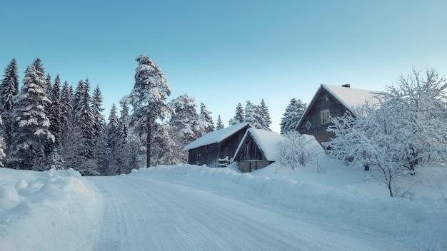 Estrada de terra com neve no campo no inverno perto da floresta