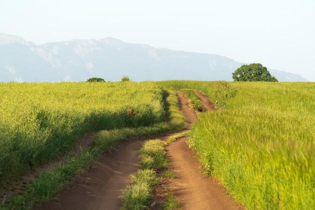 Estrada de terra em um campo agrícola