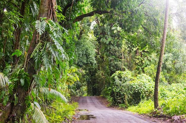 Estrada de terra em uma selva remota em big island, havaí