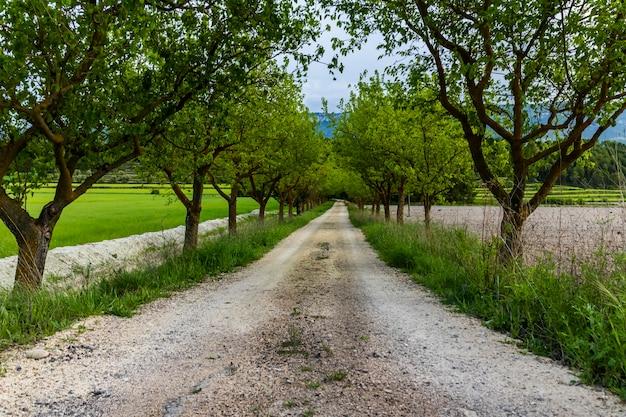 Estrada de terra entre amoreiras verdes entre prados.