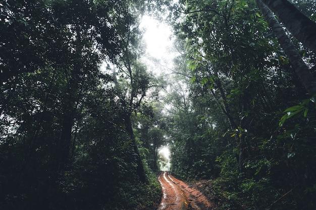 Estrada de terra na floresta árvore verde escura nevoeiro depois da chuva