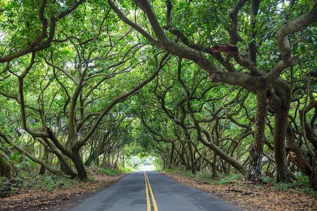 Estrada de terra na selva remota em big island, havaí