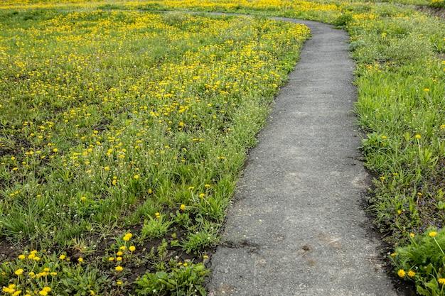 Estrada de terra não pavimentada passa por um belo prado e árvores