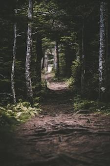 Estrada de terra no meio da floresta durante o dia
