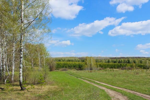Estrada de terra passando por um campo e pela floresta