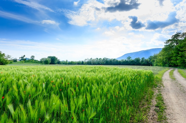 Estrada de terra pela zona rural italiana. campo de papoilas vermelhas. vida rural. paisagem italiana
