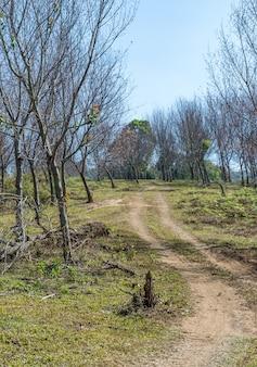 Estrada de terra solitária