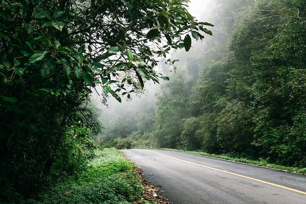Estrada dentro com floresta da natureza e estrada nevoenta da floresta tropical.