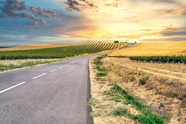Estrada deserta com um carro no horizonte, através de campos com vinhas ao pôr do sol na espanha.
