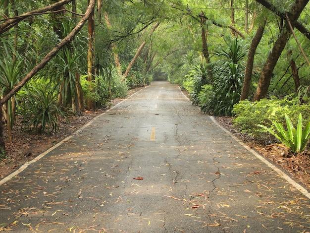 Estrada e ao redor de árvores