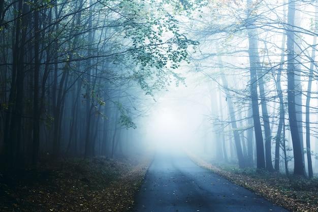 Estrada e floresta enevoada no outono.
