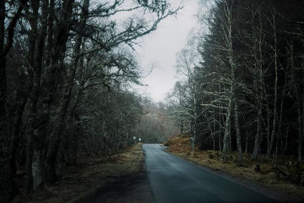Estrada, em, inverno, lugar