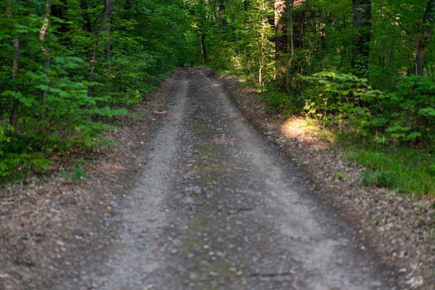 Estrada em uma floresta verde. ninguém