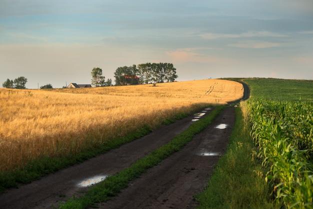Estrada entre dois campos