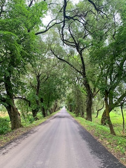 Estrada entre grandes árvores com folhagem verde em dia ensolarado.