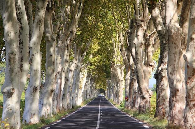 Estrada estreita, cercada por árvores altas com folhas verdes durante o dia