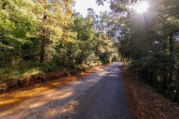 Estrada estreita que atravessa a floresta