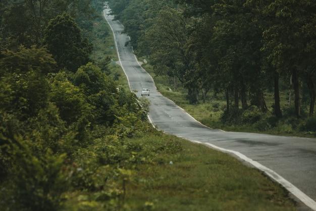 Estrada fina em uma floresta