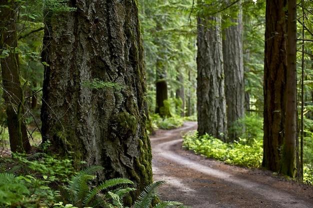 Estrada floresta primitiva