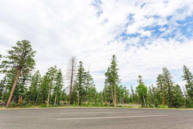 Estrada florestal contra o céu azul.