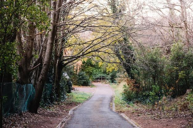 Estrada florestal espalhafatosa