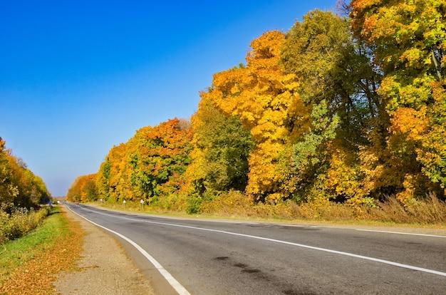 Estrada florestal rodoviária no outono, vista panorâmica da estrada de asfalto na floresta dourada de outono com árvores amarelas