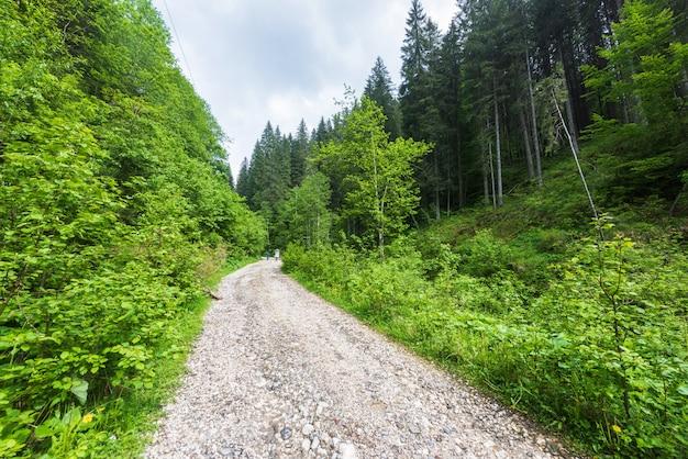 Estrada, guiando, para, um, floresta, em, carpathian, montanhas