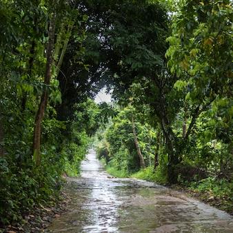 Estrada molhada, após, chuva, passagem, floresta, koh samui, província surat thani, tailandia