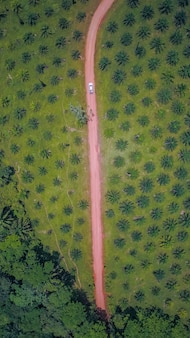 Estrada na árvore