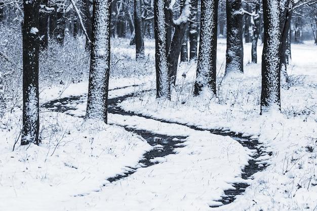 Estrada na floresta de inverno entre as árvores cobertas de neve